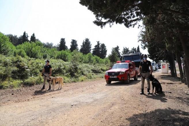 DenetimAydos Ormanı'nda Yangını Önledi