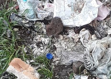 Pendik Esenyalı'da fare sorunu devam ediyor!